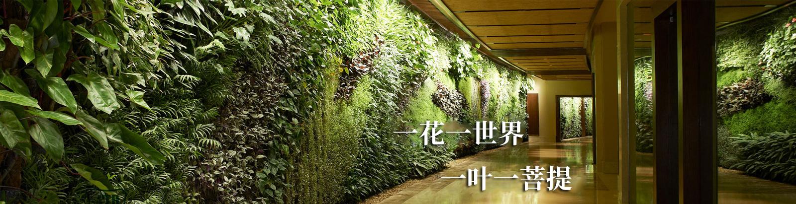 无锡植物墙