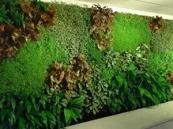 深圳龙岗中心区室内垂直绿化墙