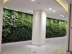 苏州仿真植物墙