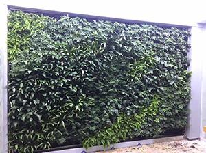 南京仿真植物墙
