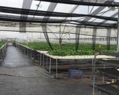 植物研究与培育