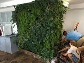 苏州植物墙